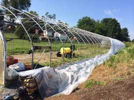 A tarp was ripped off the greenhouse at Whit Combs.