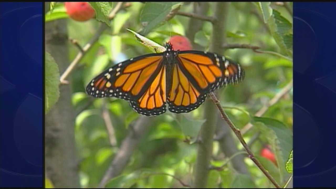 WM butterfly 7.11.14