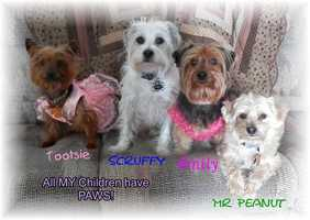 """Tootsie, Scruffy, Emily and Mr. Peanut: """"Rescued and adopted."""""""