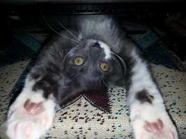 """Bugger: """"I am cute, am I not?"""" Click here to visit and LIKE the Pets WGAL page on Facebook!"""