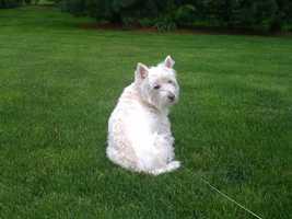 Murphy: Consumer reporter Brian Roche's dog.