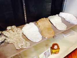 The museum has several Bigfoot footprint replicas.
