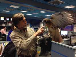 "When ""Wild Moments"" host Jack Hubley stops into the News 8 newsroom, you never know who will accompany him!"