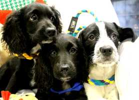 All of the dogs and puppies have been adopted.