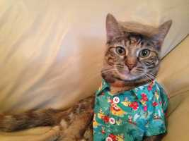 It's National Dress Up Your Pet Day! Check out these finely-dressed pets from around the Susquehanna Valley!