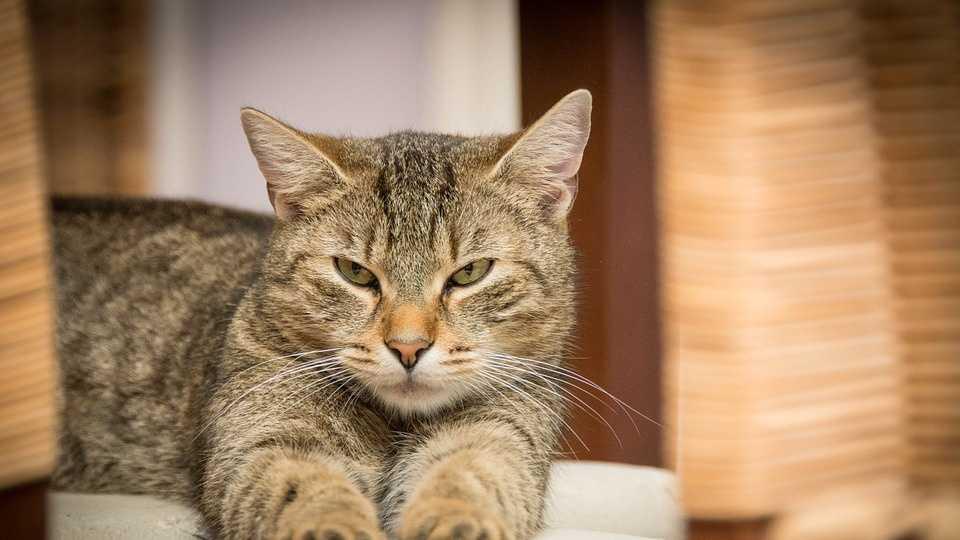 cat 3.1.16.jpg