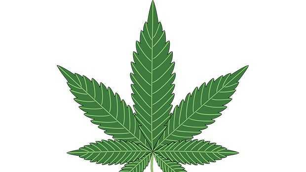 9.7.16 marijuana pixabay.jpg
