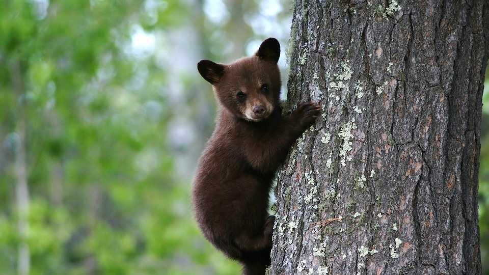 bear-79838_960_720.jpg