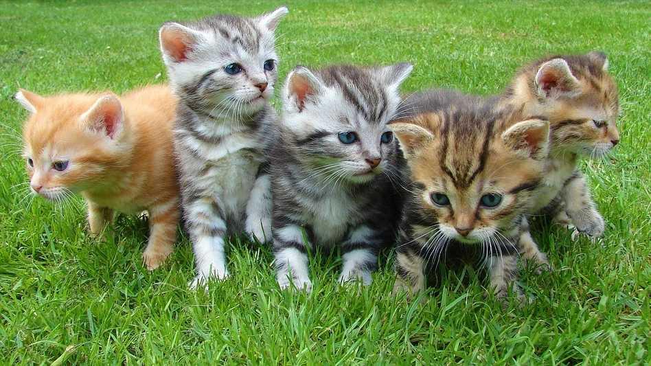 kittens-555822_960_720.jpg