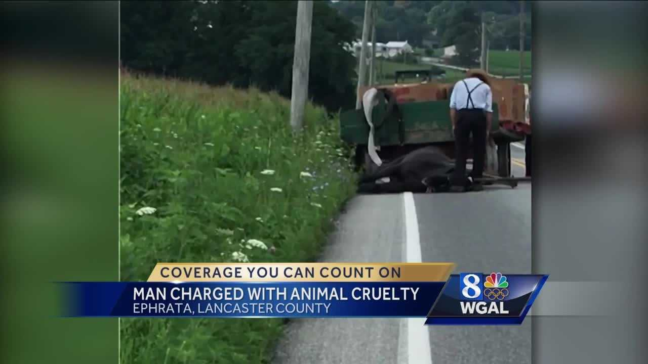 8.5.16 Man faces animal cruelty charges after horse dies on road