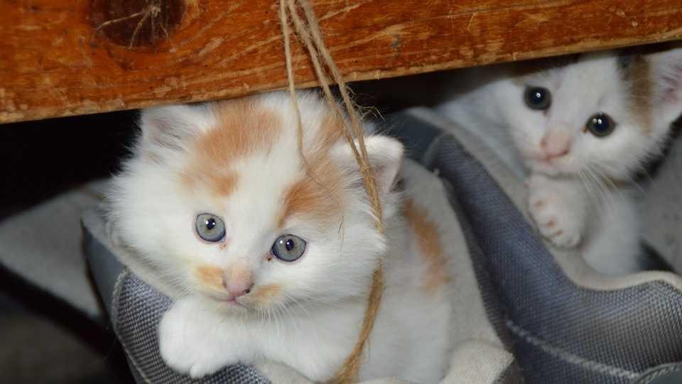 cats PIXABAY 8.16.16.jpg