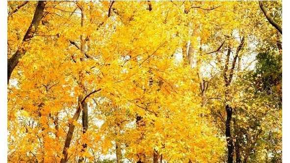 10.5.16 fall 4.jpg (3)