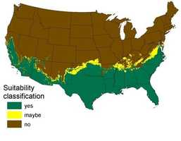 This USGS map shows where in the continental U.S. the Burmese python could survive right now.