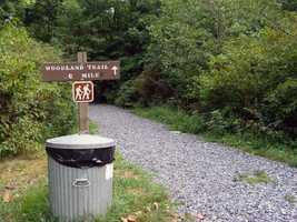 The Woodland Trail (0.6 mile) winds through a wooded wetland.