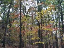 The large area of nearly unbroken forest is a haven for wildlife, including forest warblers and other deep woods animals.