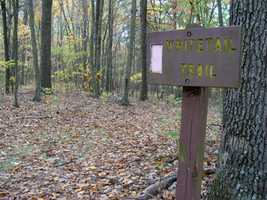 The Whitetail Trail is 1.8 miles of difficult hiking and is marked with pink blazes. The trail begins at the conservation area's west gate, crosses Victoria and Appalachian trails and the Pond, and ends by reconnecting to Victoria Trail on the south side of Peters Mountain.