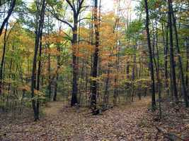 A main attraction to the conservation area is the elaborate trail system.