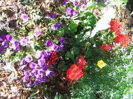 Flowers bloom at Lititz Springs Park.