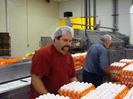 In a day, the plant processes eggs from 15 to 20 different farms.