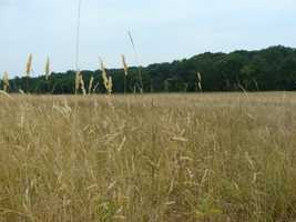It was on this field on July 1, 1863, that the first shots of the Battle of Gettysburg were fired.