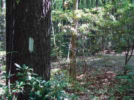 Approximately 165,000 white paint blazes mark the trail's route.