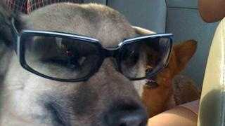 u local photo of the day Tuesday cool dog - 20047833