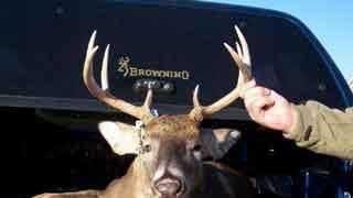 dead-deer - 10362818