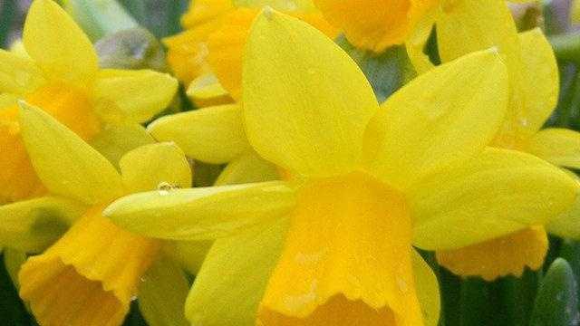 4.5 u local Spring - dawnkoller - 30839458
