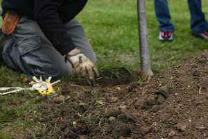 One tree is being planted for every 20,000 tickets the Milwaukee Brewers issue to offset the environmental impact of printing those tickets.