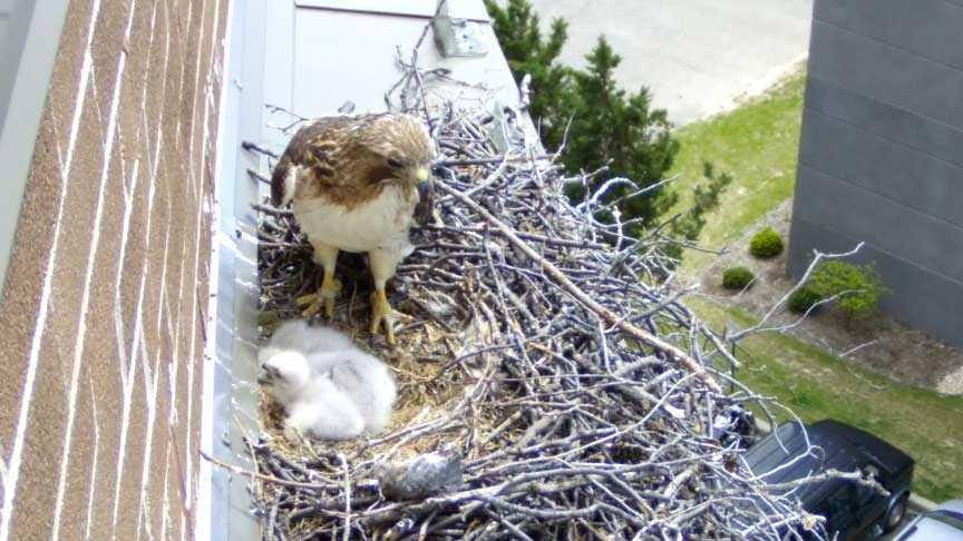 Hawk's nest live webcam
