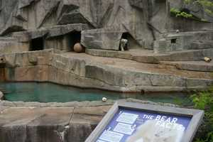 The zoo currently has two polar bears on exhibit.