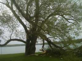 This tree branch fell along Pewaukee Lake.