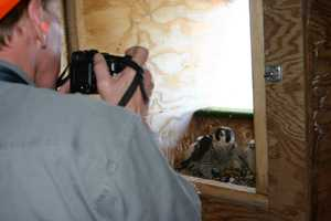 Greg photographs all of the nests and keep a nesting report for each site.  Click here to see his reports.