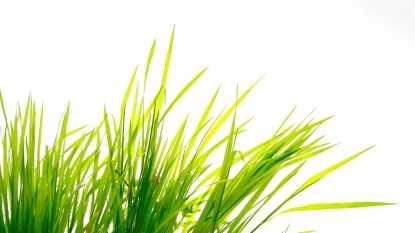 grass, summer, spring