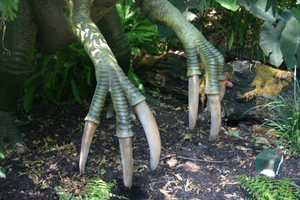 The claws were 28 inches long and the finger bone is the largest of any animal ever discovered.