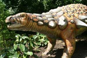 "Discovered in Canada the Edmontonia (ed-mon-TONE-ee-us) or ""From Edmonton"" weighed over 7,000 pounds and was 22 feet long."