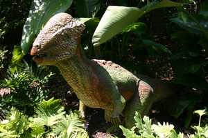 "In the late Cretaceous period throughout North America the Stegoceras (STEG-oh-SER-as) or ""Roof-Horn"" roamed."