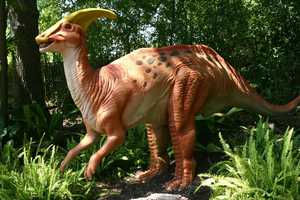 "Parasaurolophus (Par-ah-SAWR-ol-UH-fus) or ""Another Lizard-Crest"" was a 3-ton plant-eater."