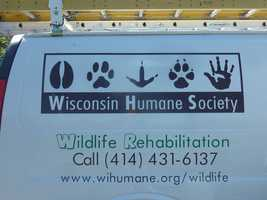 For more information about what you should do if you find an injured or orphaned animal visit the WHS website by clicking here.