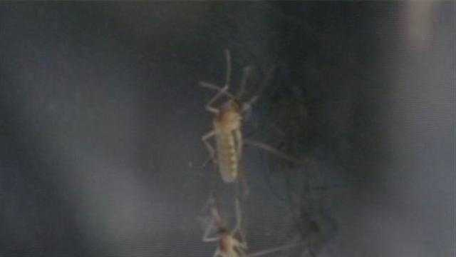 Two deaths reported from probable cases of West Nile virus