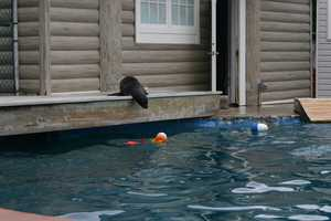 Although while the media was there, even the toys in the pool were not enough to coax him to take a dip for the cameras.
