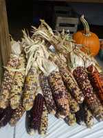 Corn and other festive decorations are for sale.