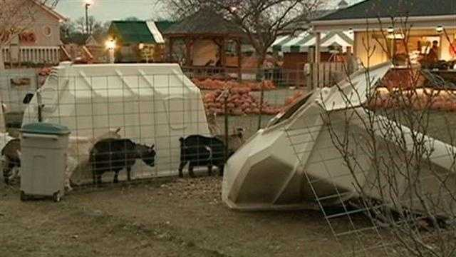 Drunken driver kills goats at petting zoo, police say