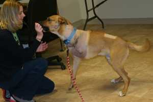 Seen here working with the Wisconsin Humane Society-Racine Campus's director.