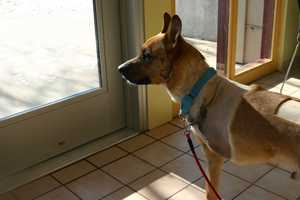 Jerome is likely to go to an adoptive family that does not have other dogs.