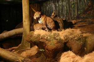 As the cubs get more comfortable with the public they will be on exhibit more. Currently they are on public exhibit 10:30am-1pm daily.