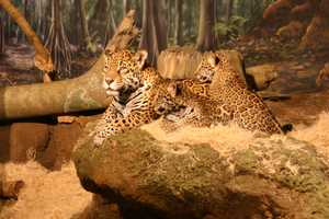 For more information about the naming contest sponsored by Jenkins Jaguar and Wisconsin Jaguar Ltd auto club click here.
