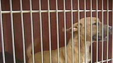 Dog behind bars