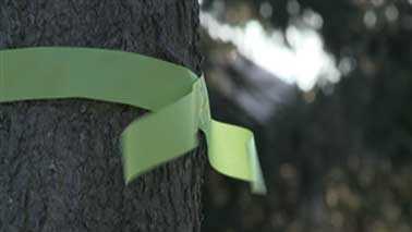 green ribbon (Mobile).bmp
