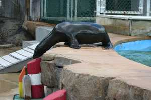 At this age, Colby is very curious.  Equate a 10-month-old sea lion pup to a toddler...